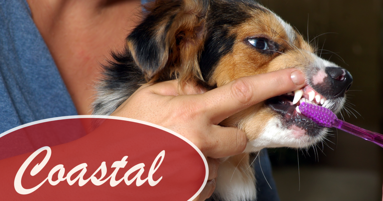 How to Keep your Pet's Teeth Clean