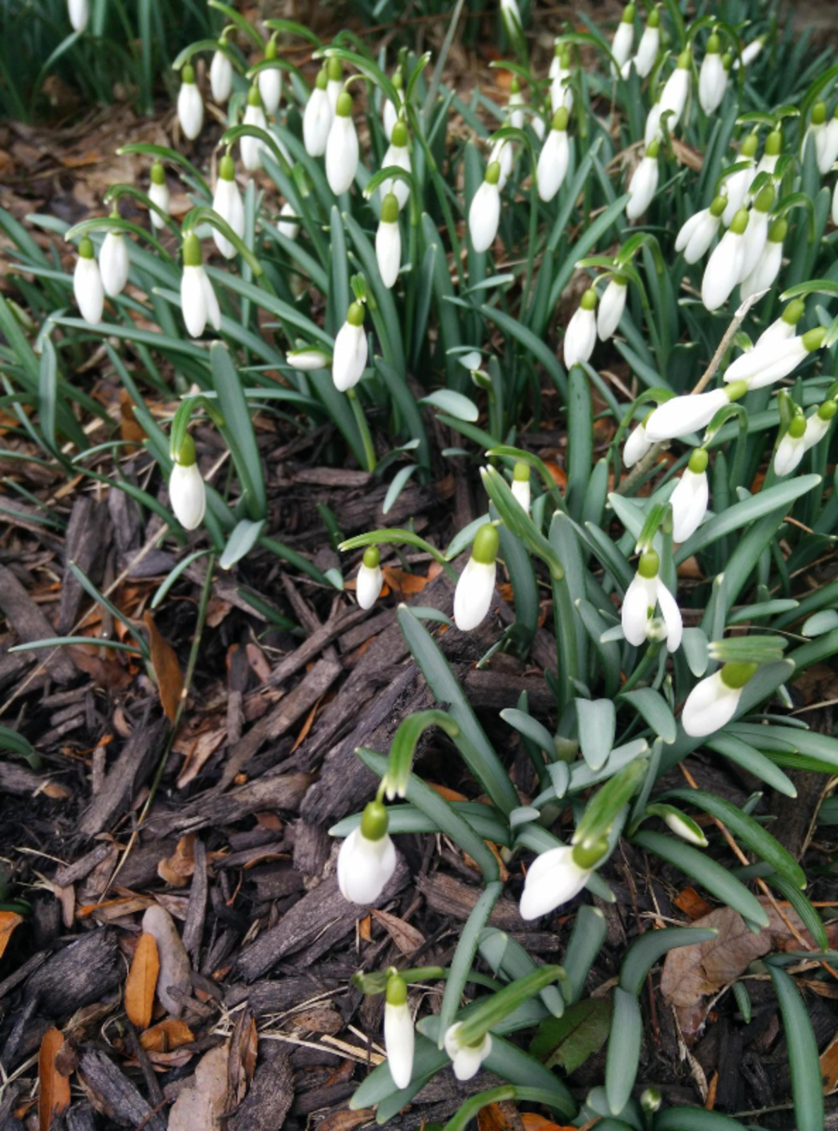 Signs of Impending Spring