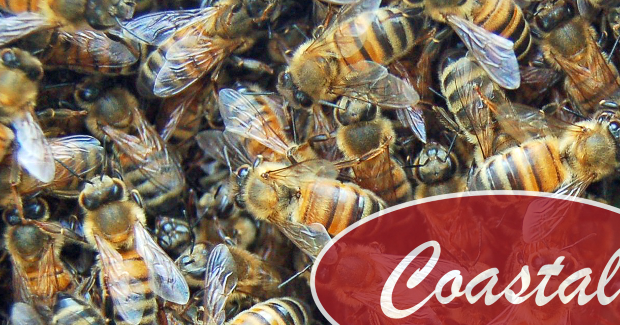 How to Avoid Common Beginner Beekeeping Mistakes