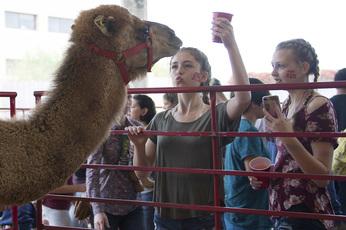 Open House Camel