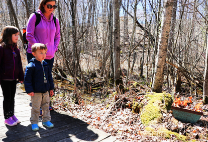 The Enchanted Forest at Camp Newaygo's Facebook photo album