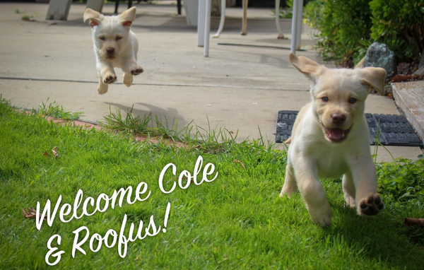 Cole and Roofus