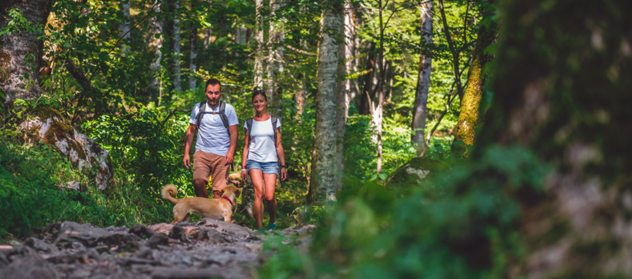 Couple hiking through the woods with dog