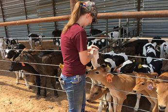 Elizabeth Lake and calves