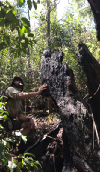 PhD student Eli Bendall checking a burnt tree