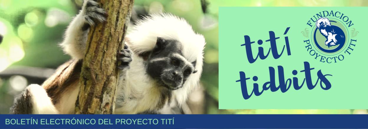TITI TIDBITS | OCTUBRE 2018