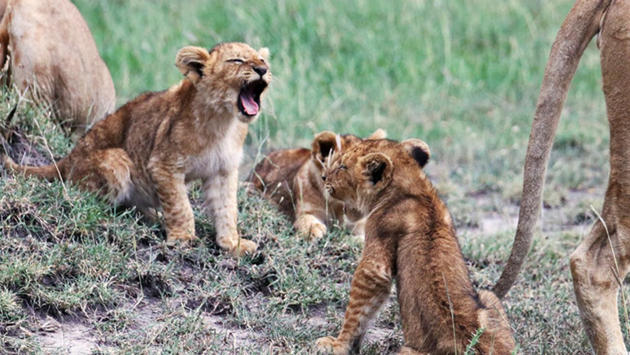 Vote for your favorite #LionWorldTales Photo