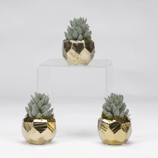 Aloe in Gold Ceramic Planters