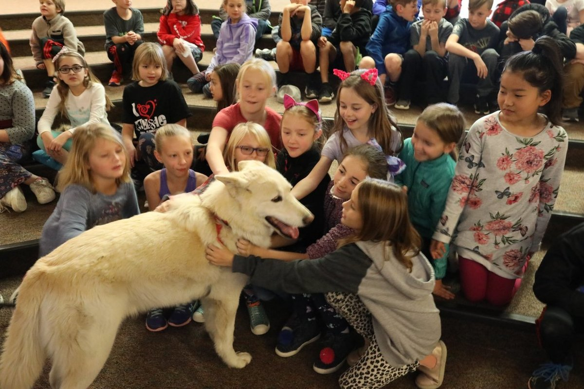 As part of their animal adaptations study, today 4th graders at Fireside Elementary were visited by the WOLF Sanctuary. This great organization helps students see animal adaptations in person, as well as bring awareness to the protection of this amazing animal.