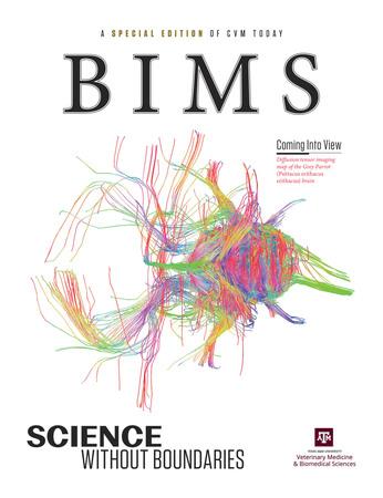 BIMS cover