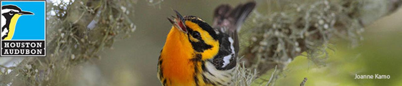 Houston Audubon