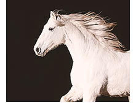 NATURE - Equus: Story of the Horse – Origins