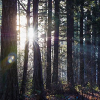 Morning light streams through the trees at Nadaka Nature Park.