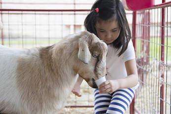 Girl feeding goat at last year's Open House