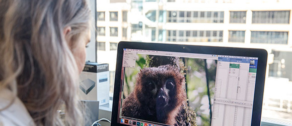 A Luther Rice fellow examines an image of a lemur on a computer