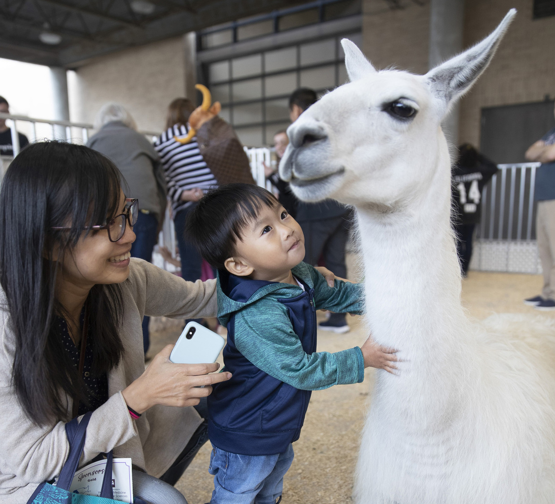 Open House llama