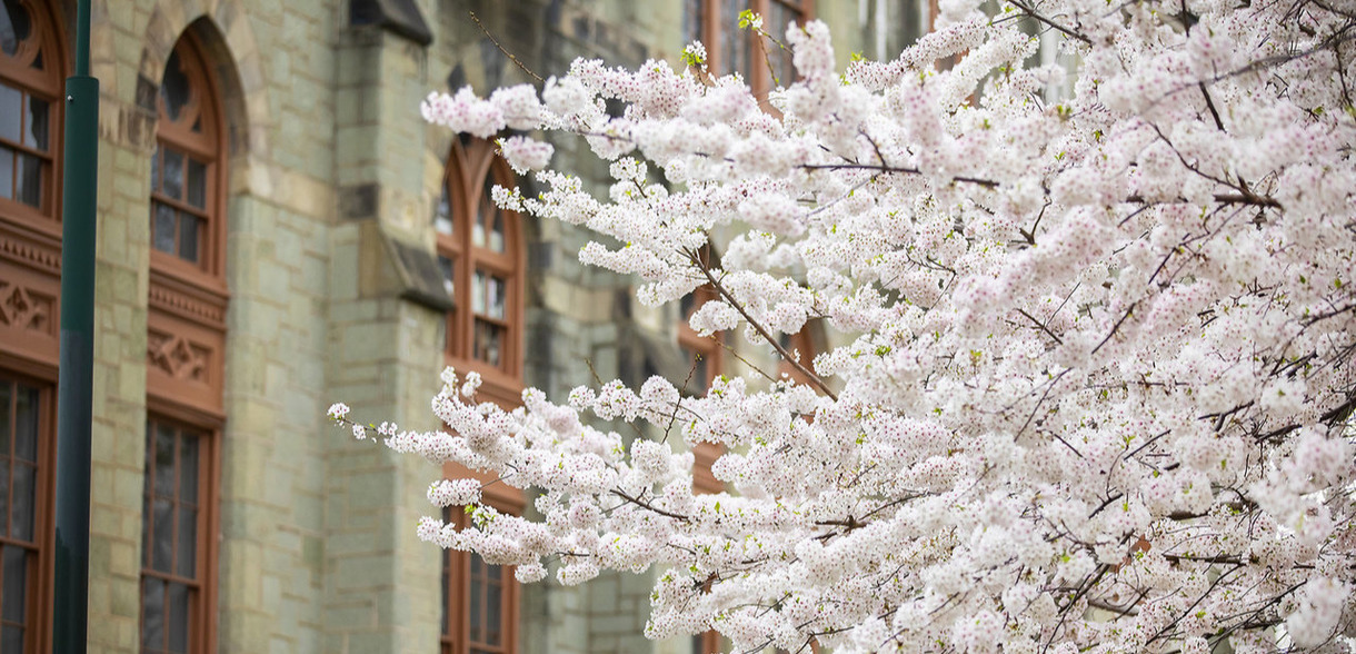 Tree in spring bloom in front of College Hall