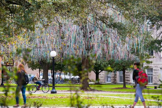 Tulane bead tree