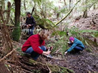 Volunteers set traps for the Dandenong Burrowing Crayfish