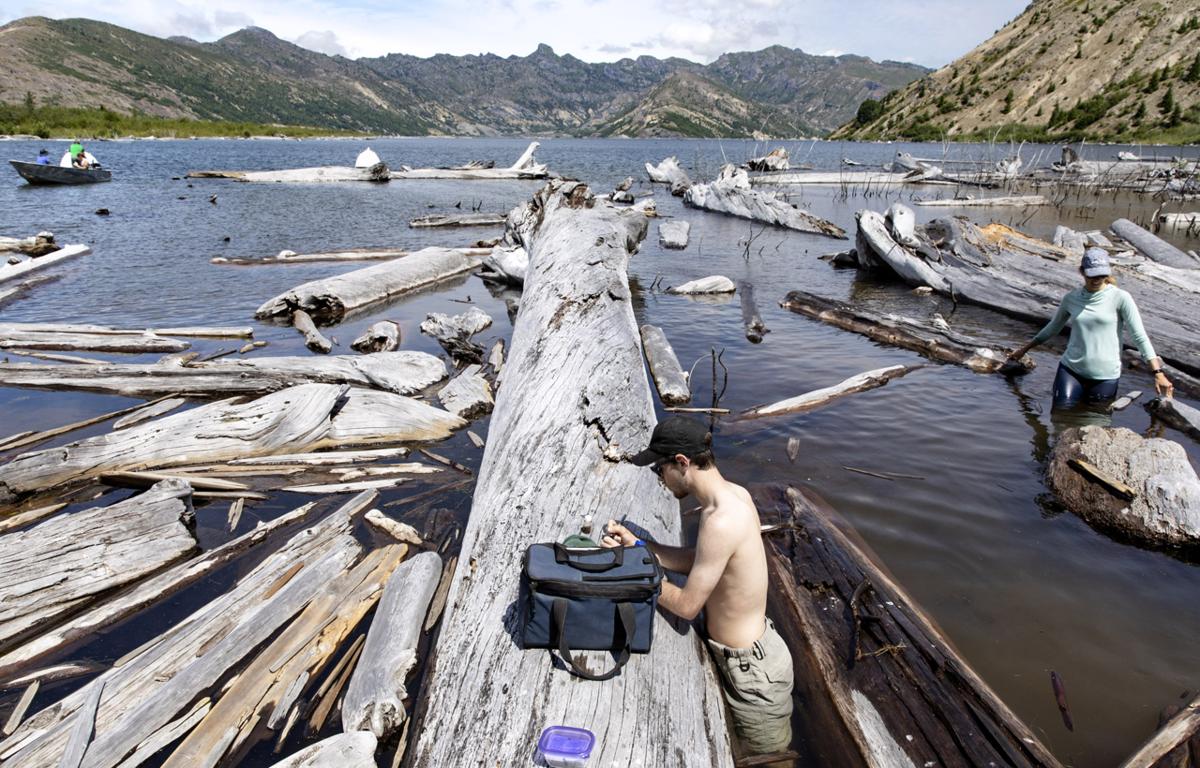 Logs in Spirit Lake