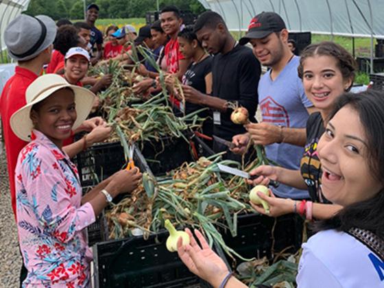 2019 SUSI participants sort green onions on Miami University's Institute for Food farm.