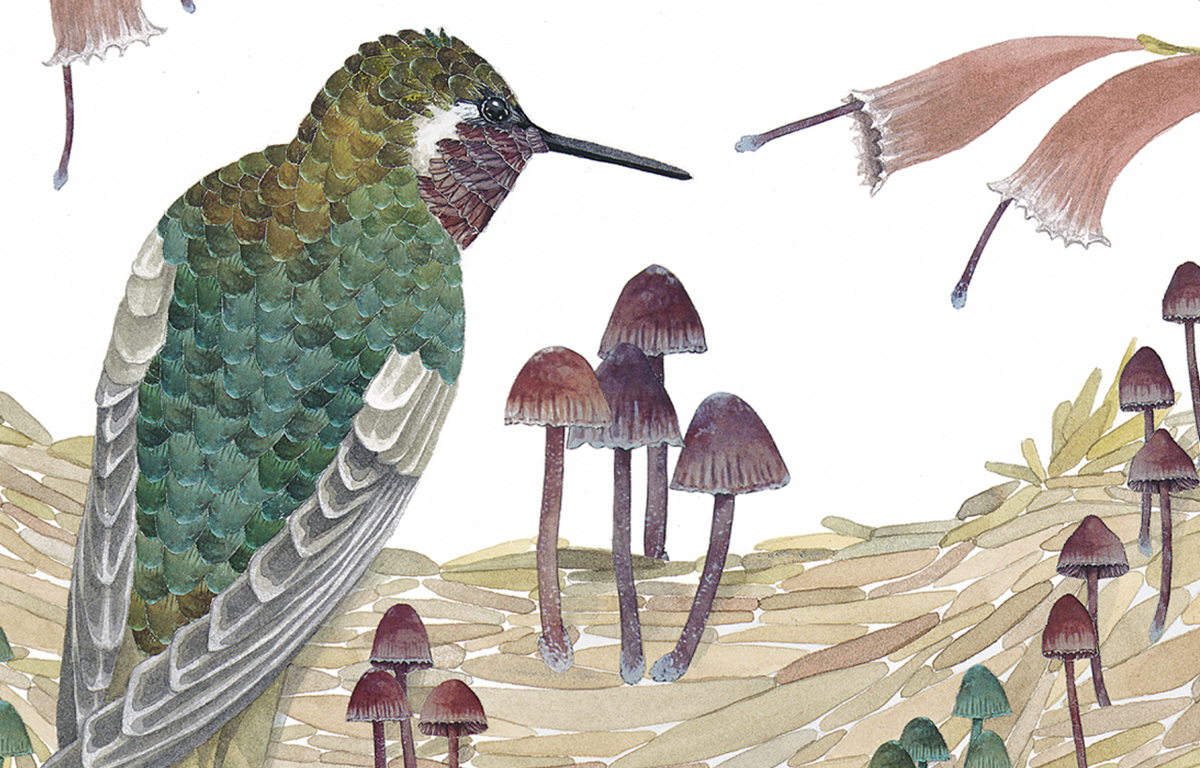 Illustration by Maria Jost