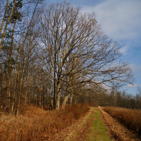 Trail to the north field