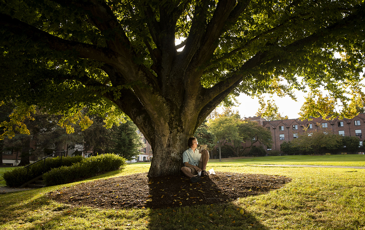 Photo of a student reading in front of a large tree