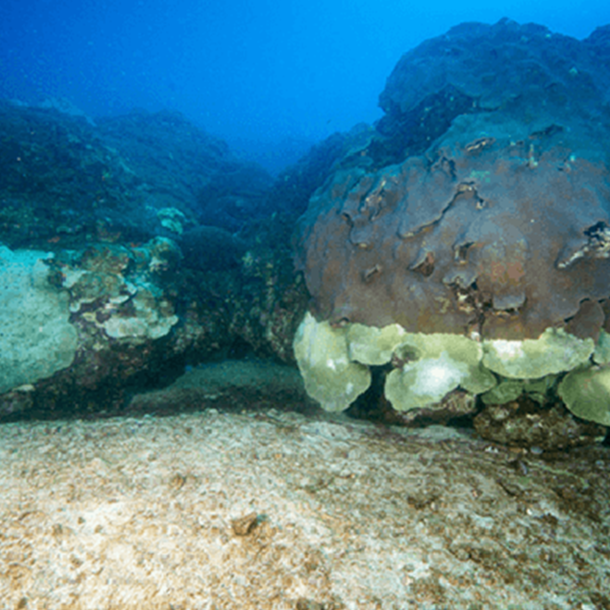 Explanation Found For Die-Off Of Coral Reefs In Gulf Of Mexico
