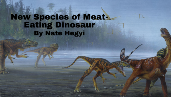 New Species of Meat-Eating Dinosaur Discovered