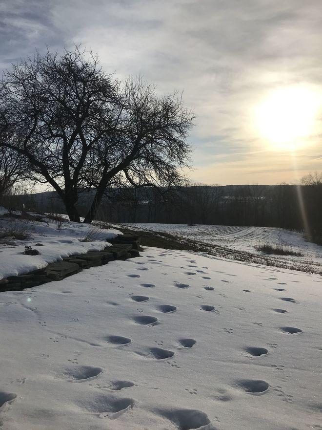 Late winter sunrise