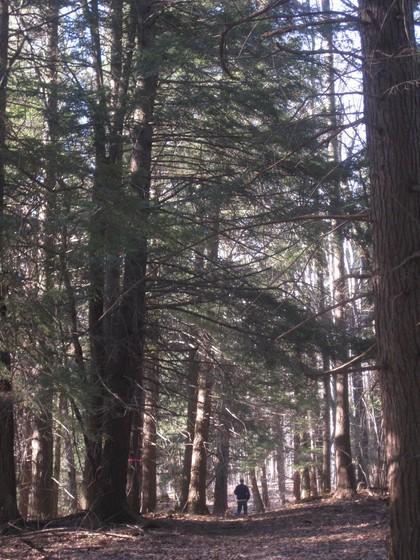 Wayne Coger in woodlands
