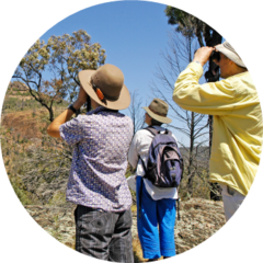 Citizen science and bushfire recovery