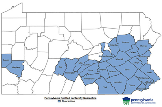 A map of the state of Pennsylvania with counties with spotted lantern fly colored blue