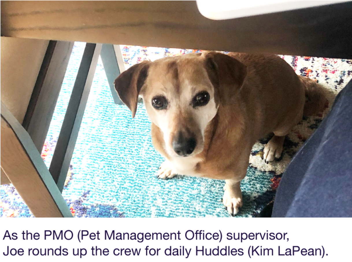 As the PMO (Pet Management Office) supervisor, Joe rounds up the crew for daily Huddles (Kim LaPean).