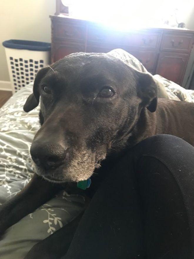 Catherine Wegman's dog supporting everyone during quarantine