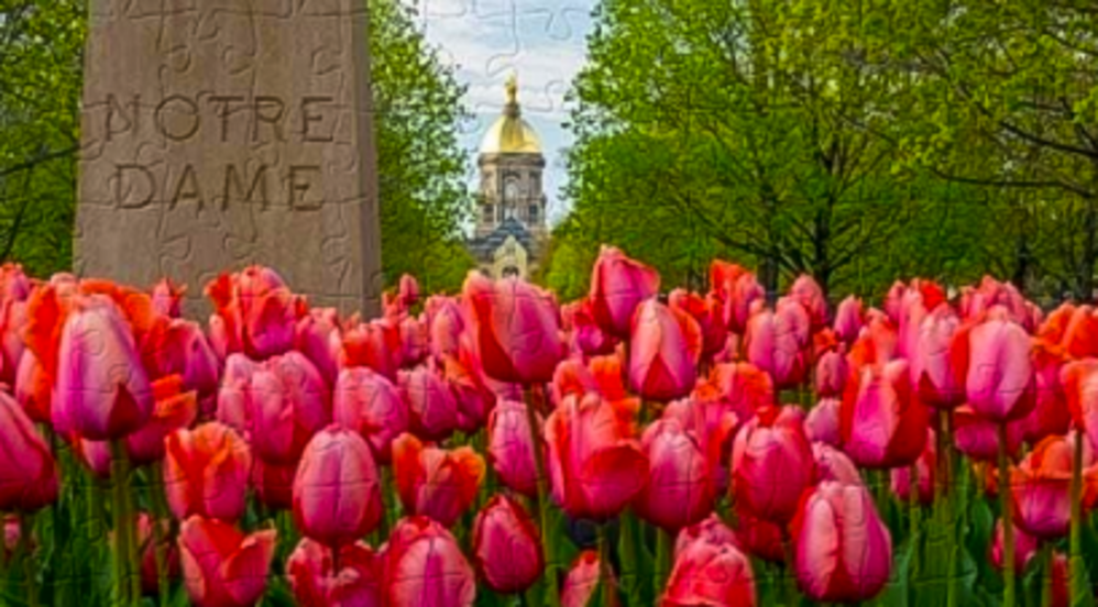 Photo of tulips at Notre Dame that is also a puzzle.