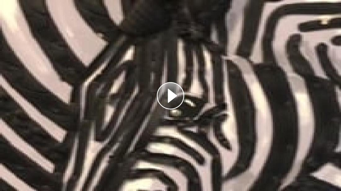 Zebras - Federico Uribe Family Walkthrough with Gail Stavitsky