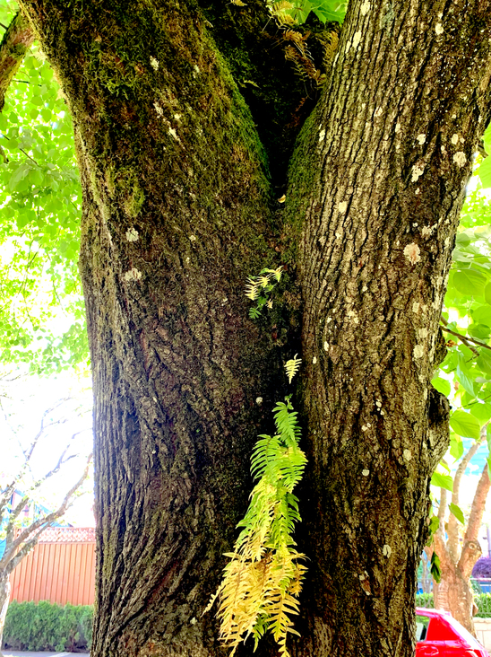 Ferns growing out of the trunk of a tree.