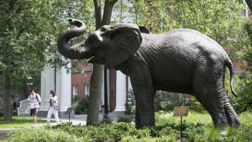 Tufts Jumbo statue on the academic quad