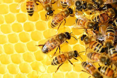 bees on a bee hive