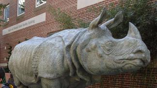 Bessie the Rhino