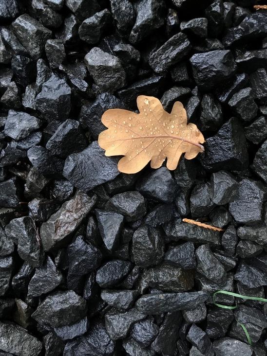 A fallen oak leaf on rocks.