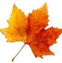 Lilly leaf