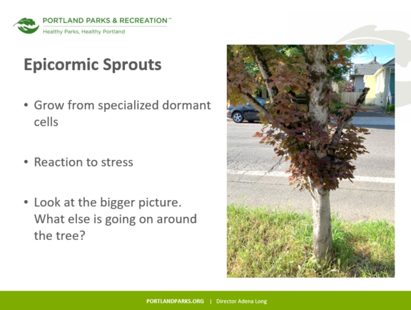 A slide from the Advanced Pruning Workshop.