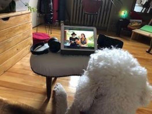 dog and meditation