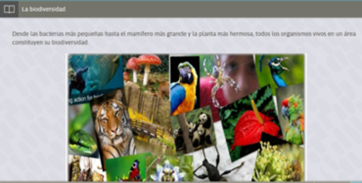 module example showing wildlife and Spanish text