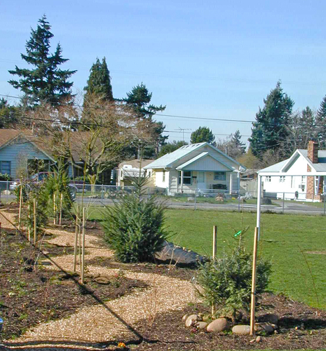 Rigler School Trees planted in the early 2000s.