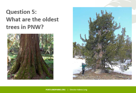 A slide from the Ask an Arborist session on June 16.