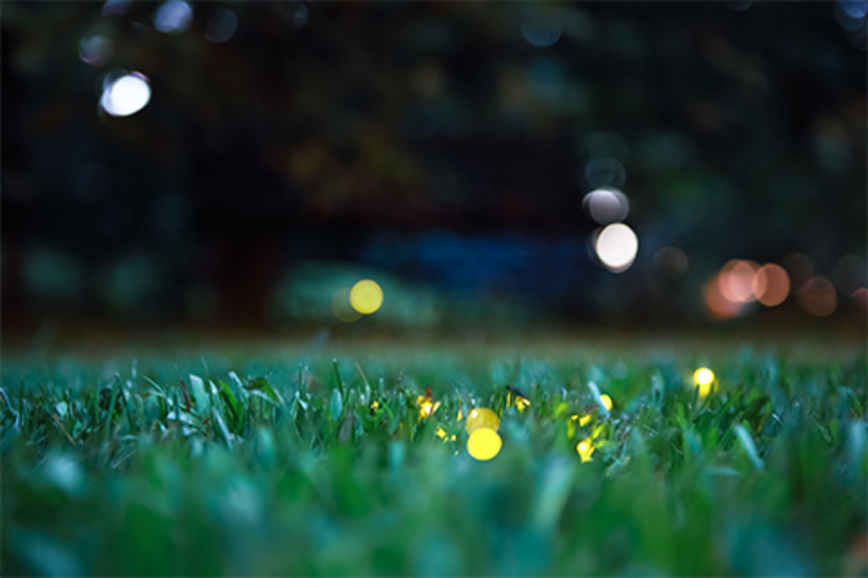 Fireflies light up in the grass at night